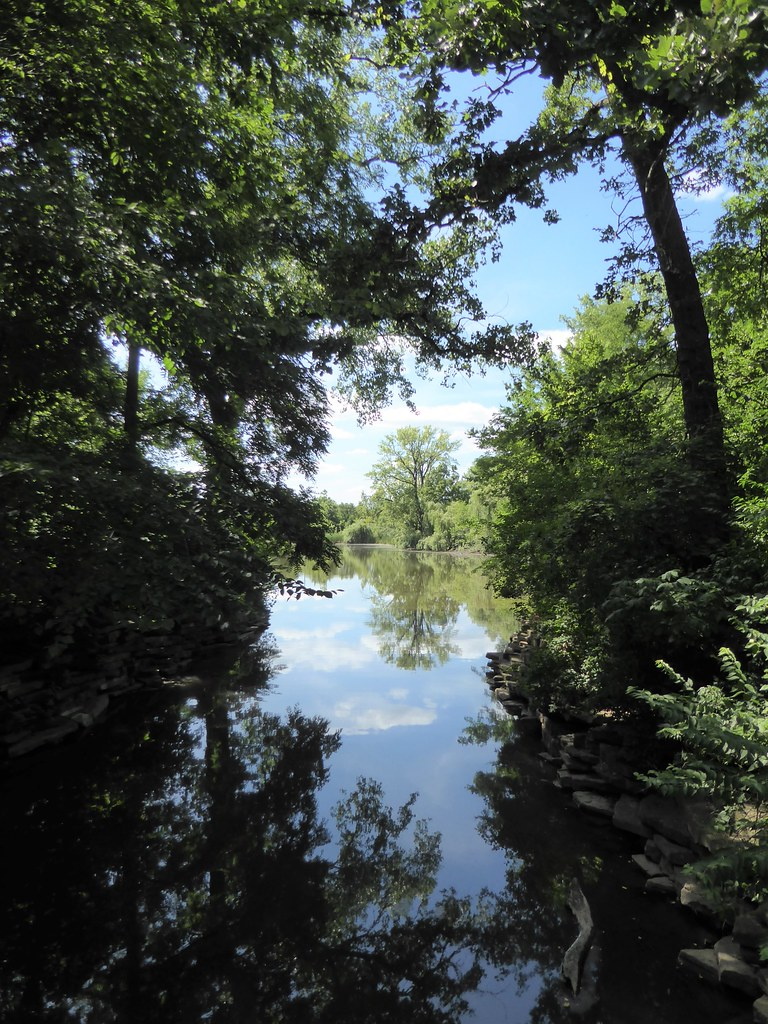 Wheaton, IL, Herrick Lake Forest Preserve, Reflection