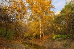 BG, Autumn in the mountain
