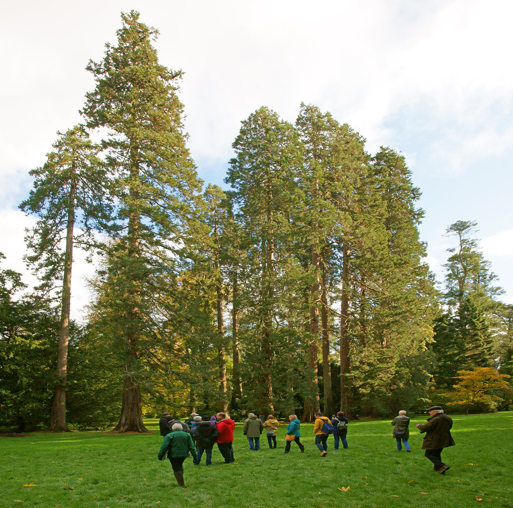 Westonbirt, The National Arboretum, Gloucestershire, England