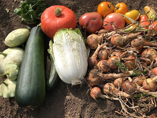 harvest IMG_1671