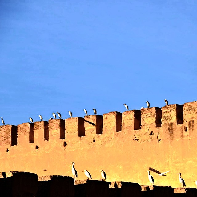 Birds on the Defense Wall in Meknes