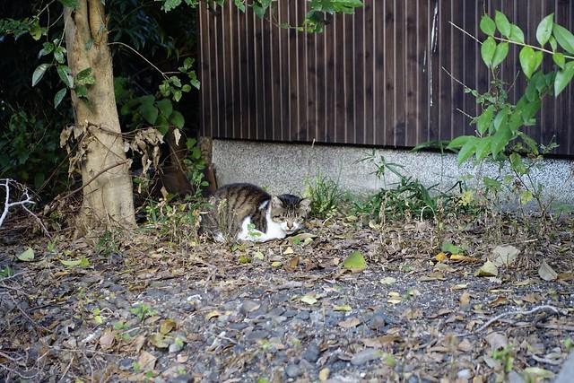 Today's Cat@2019-11-16