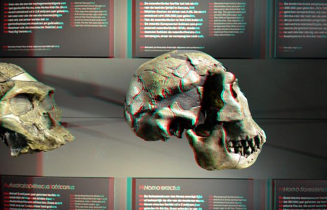 Skulls Naturalis Leiden 2019 3D