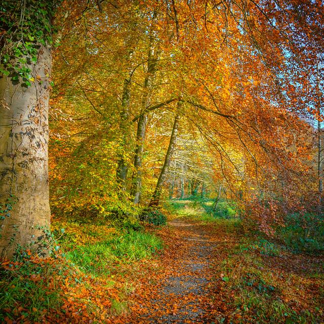 Autumn Collection - 14 - palette