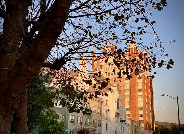Autumn in Oakland