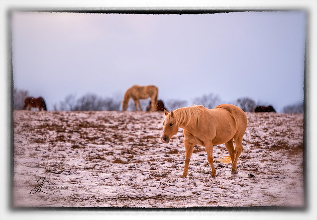Horses on a Snowy Day