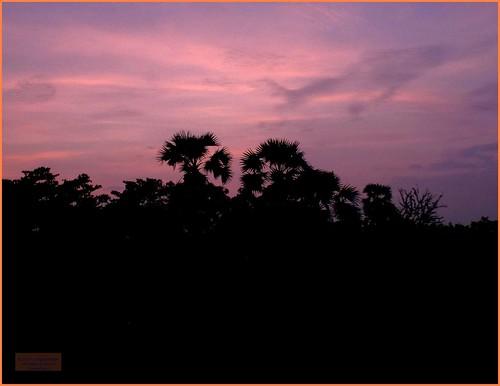 asia seasia asean thailand thai ราชอาณาจักรไทย isaan khonkaen tree sunrise morning 2019 color colour decade2010 canadagood