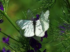 Пеперуди