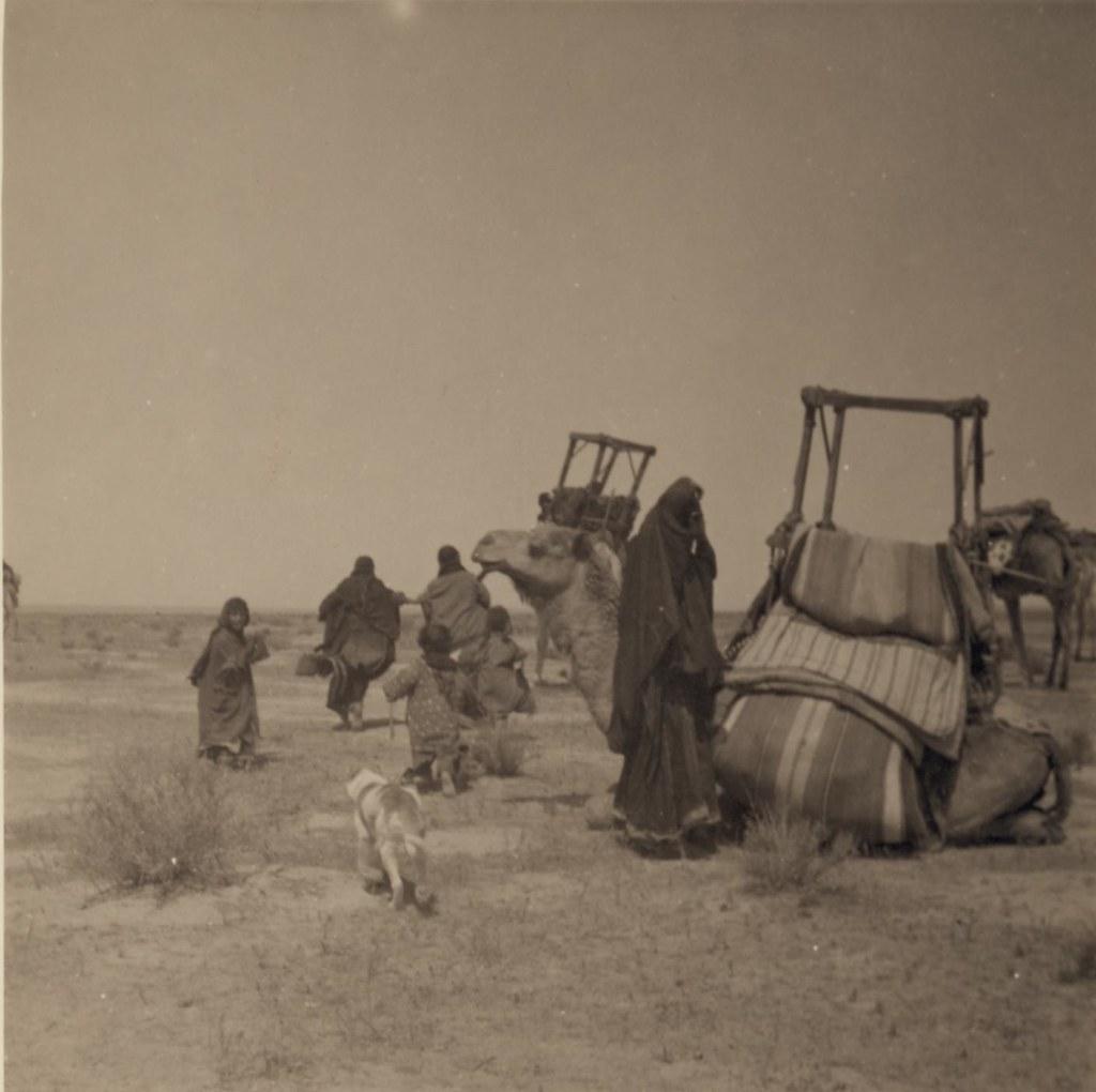 06. 27-30 апреля. 2 верблюда с бадажем