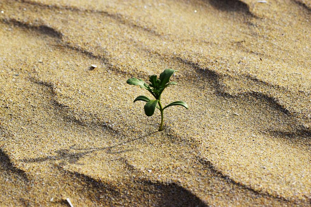 En la playa  .... / On the beach ... (see in large)