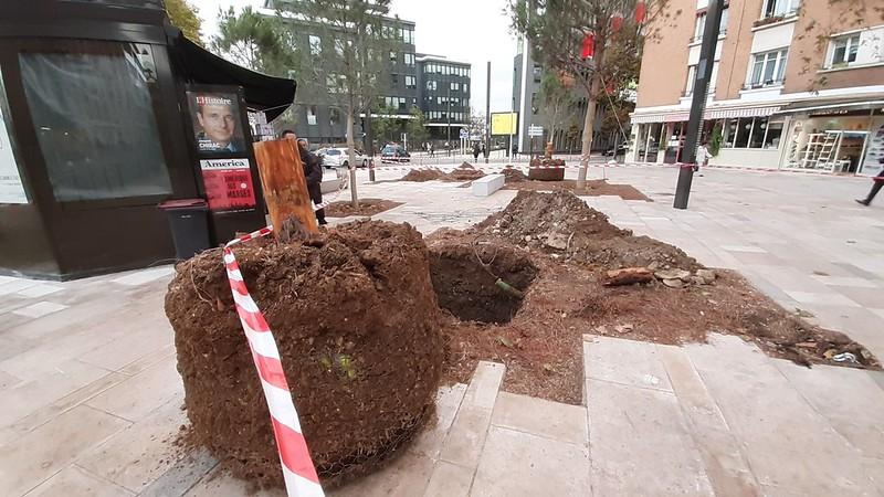 Place Jean Jaurès, arbres morts  - 15 octobre 2019