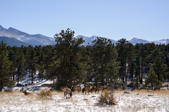 View of the Herd