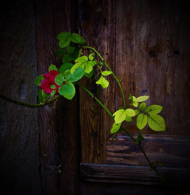 L'uomo che è cieco alle bellezze della Natura, ha perduto metà del piacere di vivere. (Powell)