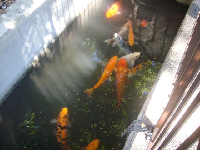 ALAMO COURTYARD FISH POND