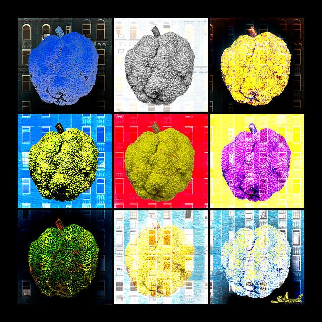 Osage Orange X9 - Anachronous Fruit & Art
