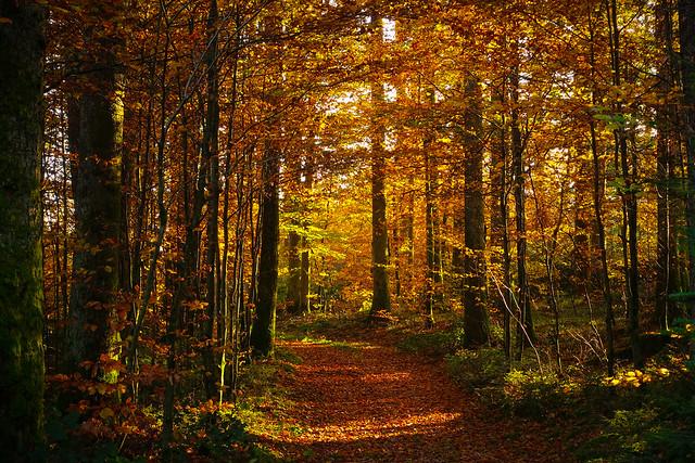 The last leaves in the november sun