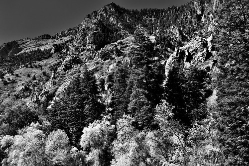 alpineloopdrive alpineloopscenicbackway americanforkcanyon anseladamslookfromcapturenx2 aspen aspenleaves aspentrees aspens autumncolors autumnleafcolors azimuth304 blackwhite blueskies canvas capturenx2edited centralwasatchrange colorefexpro colorofleaves coloroftrees day8 hillsideoftrees landscape leafcolors lookingnw mountainpeak mountains mountainsindistance mountainsoffindistance mountainside multitudeofplantleafcolors nature nikond800e outside populustremuloides portfolio project365 quakies quakingaspen ridgeline ridge ridges rockymountains stateroute92 sunny timpanogoscavenationalmonument trees utahhwy92 utahnationalparks2017 utahstateroute92 wasatchrange westernrockymountains timpanogoscavenationalmonumen utah unitedstates