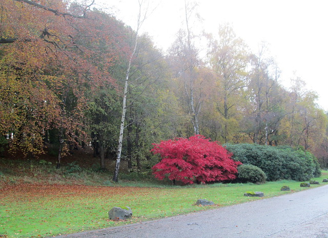 Balbirnie Park, Fife, autumn trees