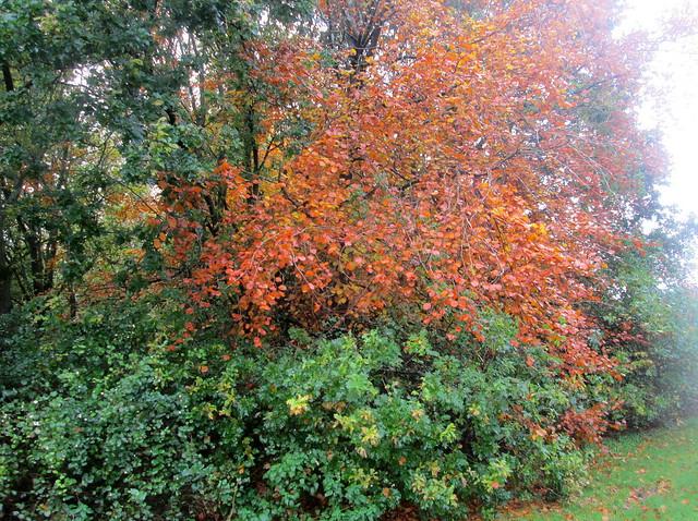 Balbirnie Park, Fife, autumnal trees