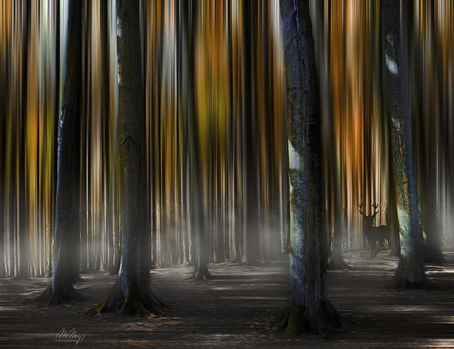 Fairytale Forest III