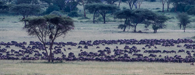 2019.06.07.3035 Great Migration (Explored)