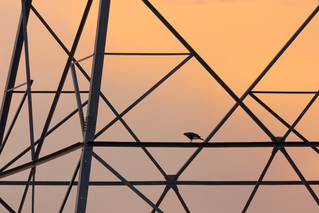 A Harris's hawk perches on a transmission tower at sunrise on a breezy morning on the Vaquero Trail in McDowell Sonoran Preserve in Scottsdale, Arizona in November 2019