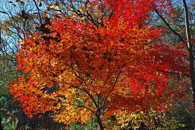 Fall Colors - Seoul