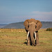 Image: Second Encounter with a Big Tusker