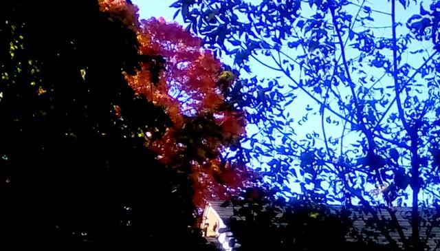 Trees in Autumn! Menominee Michigan