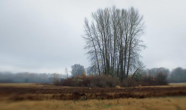 Fog on the Land II