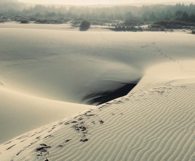 Dunes near Tenmile Creek