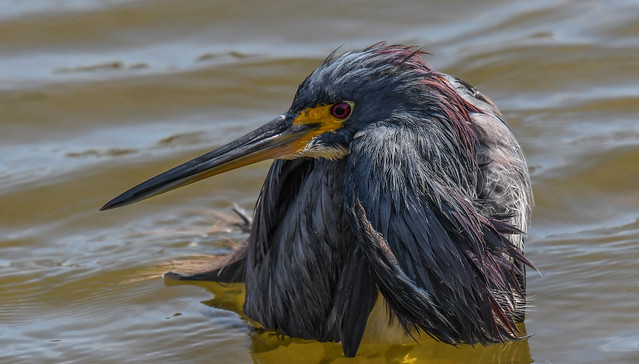 Herons day out......5 of 5