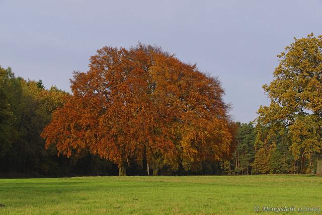 Die Farben des Herbstes 4