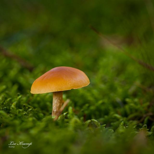 Mushroom | Paddenstoel