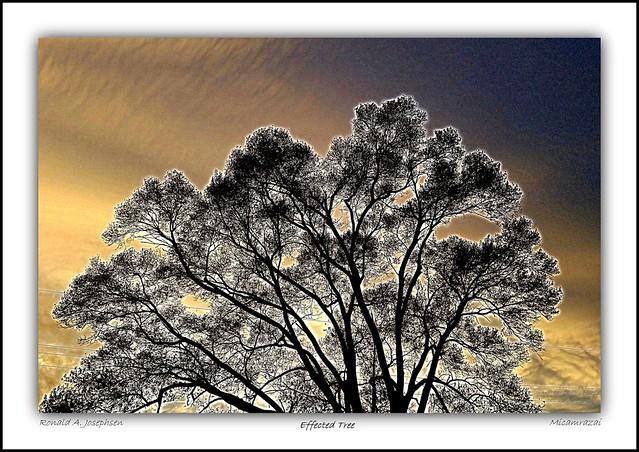 TreeWiresClouds