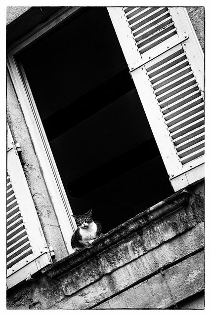 Minouche à la Fenêtre