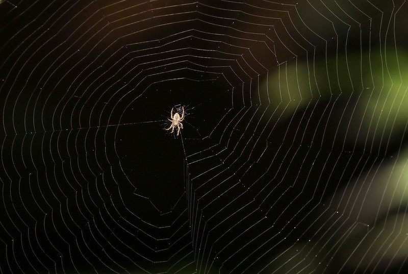 Spider web_Costa Rica_Ascanio_ 199A9465