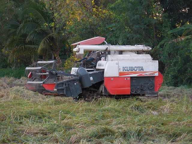 Combining Rice with small Kubota 3