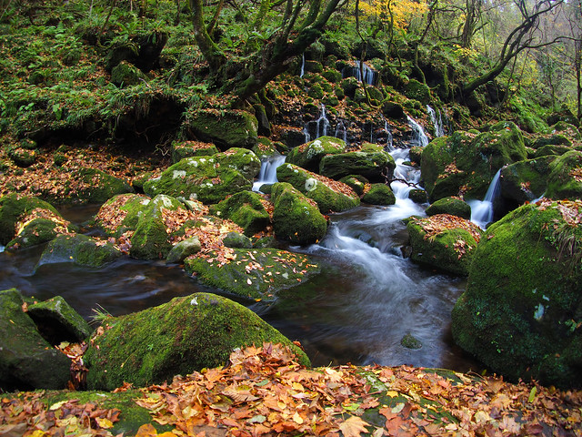 Fallen leaves and Moss
