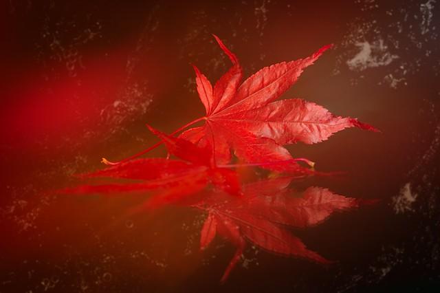 Red autumn 🍂🍁