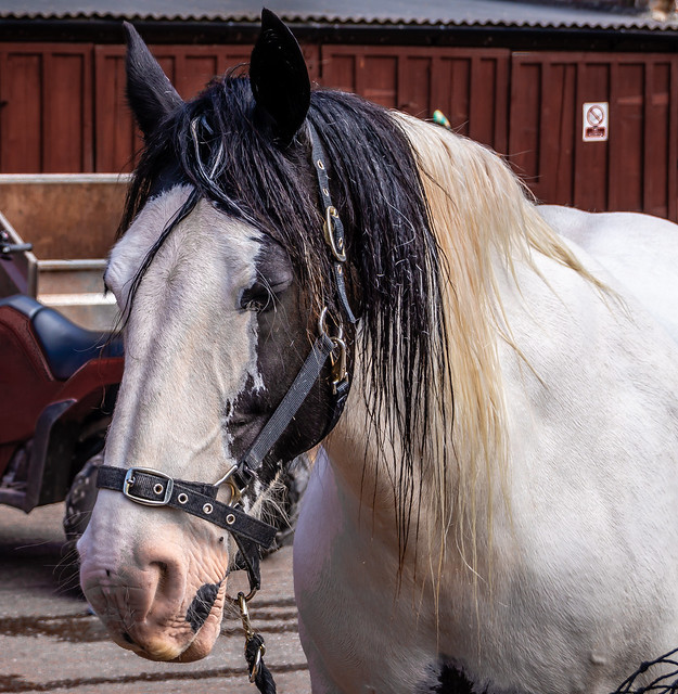 1 of the horses in cockington Devon
