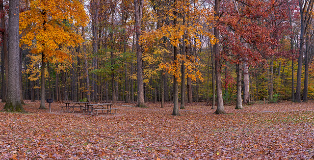 Fall woods panorama