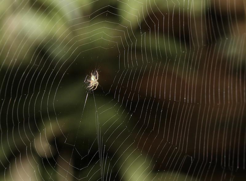 Spider web_Costa Rica_Ascanio_199A9472