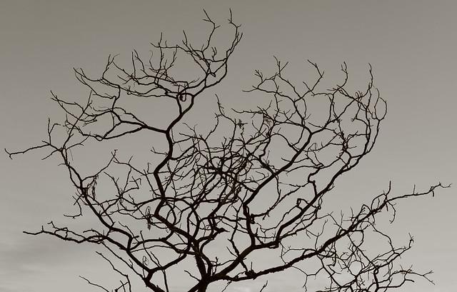 Barren tree against the Sky
