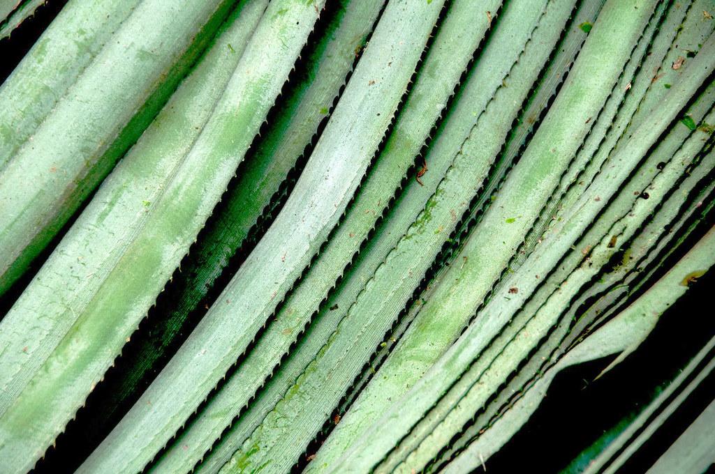 pinatex fensismensi blog coin purse