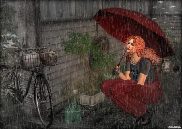 ► ﹌Sous la pluie de novembre ...﹌ ◄