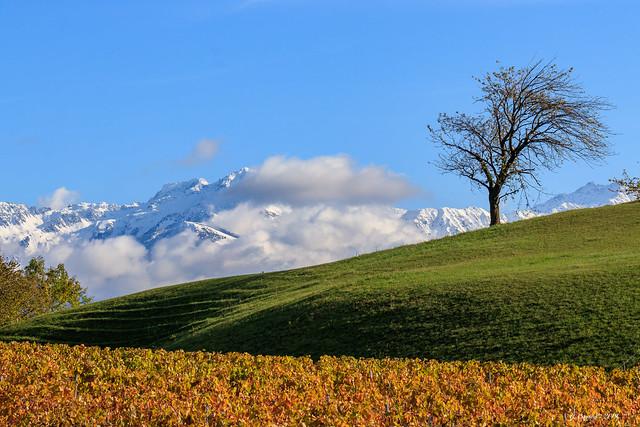 L'arbre et le massif  de belledonne  (Savoie 11/2019)