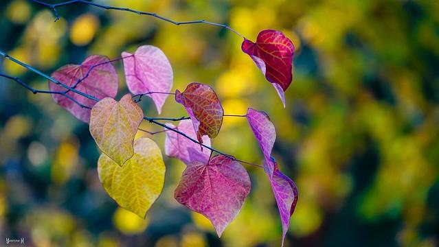 #Autumn - 7721