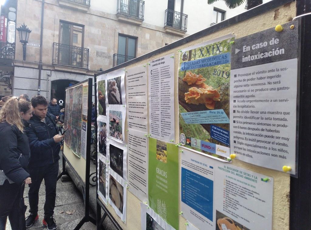Exposición de setas en la plaza de la Libertad.  (13)