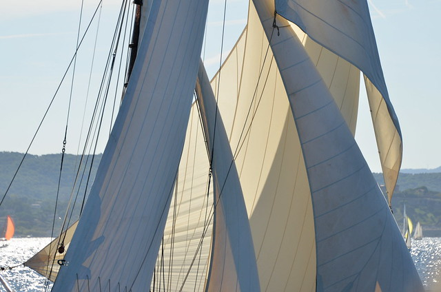 In the light and shadow (Marigold 1892, Les Voiles de St Tropez 2019)